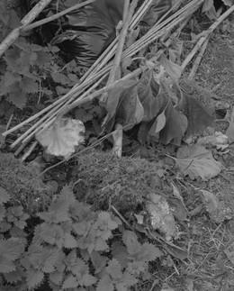 virginiasunflowers026.jpg