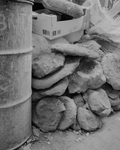 Fossils3.jpg
