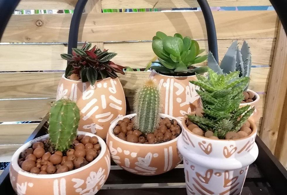 Pot à succulente - blanc