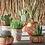 Thumbnail: Pot à succulente - terracotta