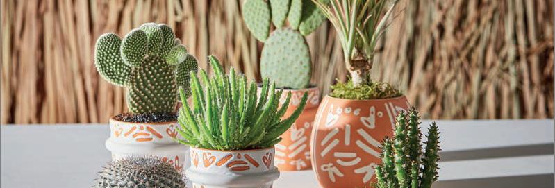 Pot à succulente - terracotta