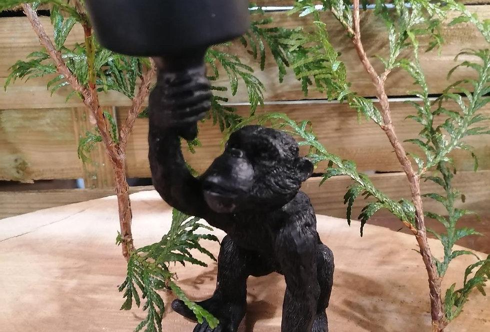 Photophore singe