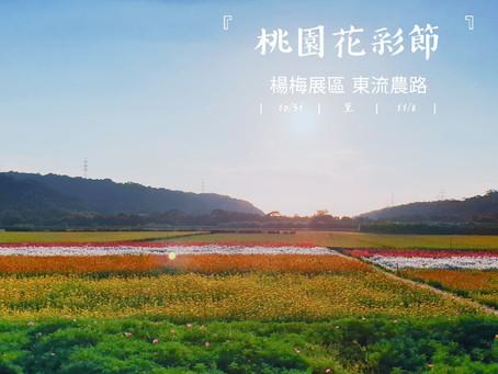 10/28 楊梅花況