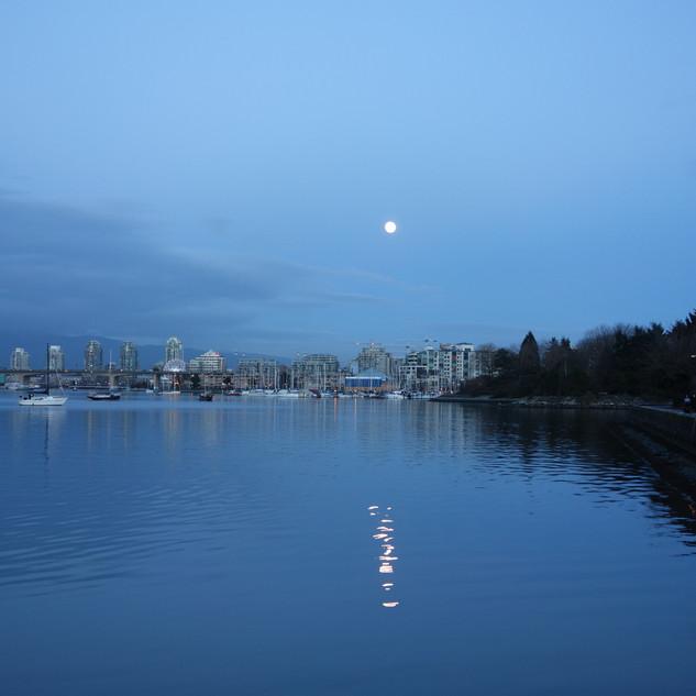 Delicate Moonlight