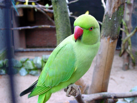 Mythical Tales Part 2 : Tales Of The Parrot