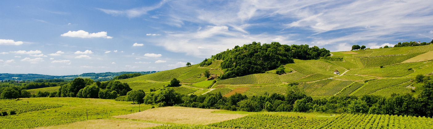 vineyards%20near%20Chateau%20Chalon%2C%2