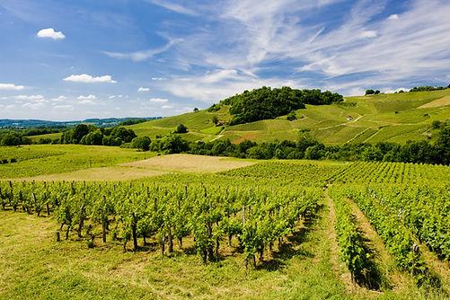 vineyards near Chateau Chalon, Departeme