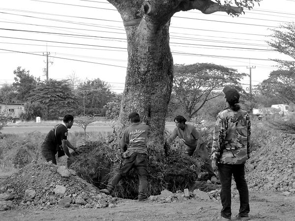 tree_planting.JPG