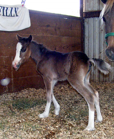 2010 Filly by Squire  Died from septic j
