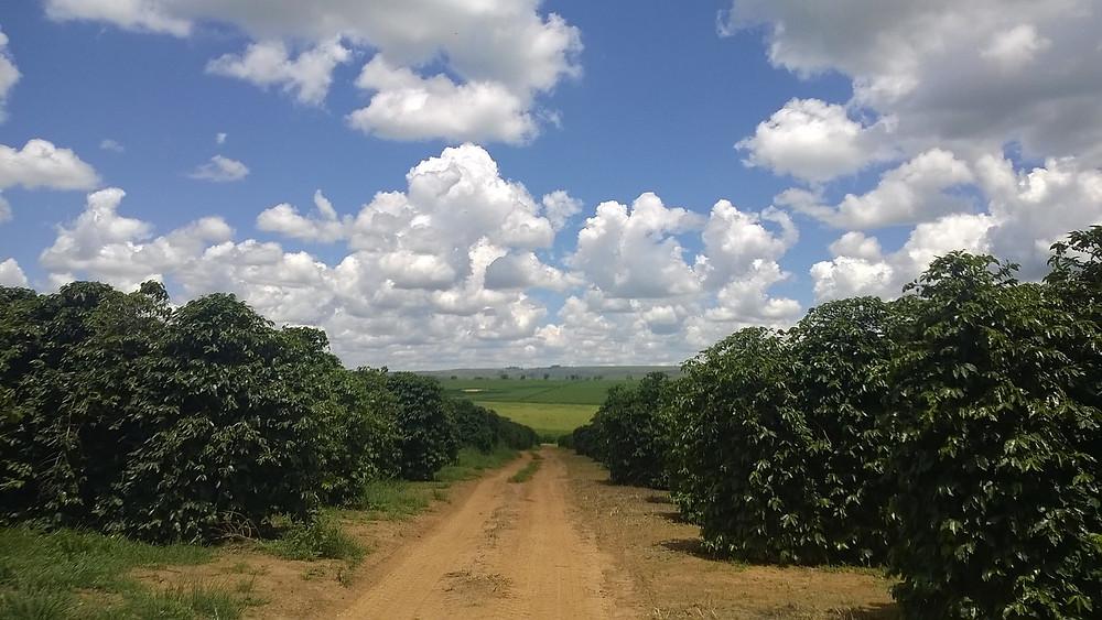 Misael Varella presta homenagem aos produtores rurais de Minas.jpg