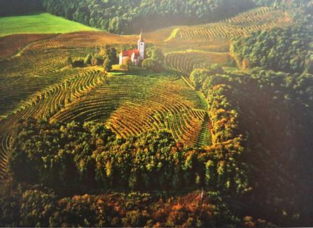 Get to know Slovenian wine -        Podravje region, Štajerska Slovenia wine district