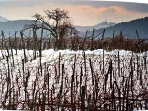 Get to know Slovenian wine - Primorska region, Karst/Kras wine district