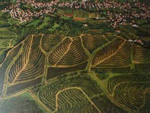 Get to know Slovenian wine - Primorska region, Vipava Valley district