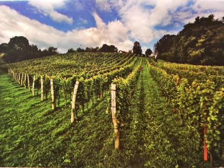 Get to know Slovenian wine - Podravje region, Prekmurje wine district