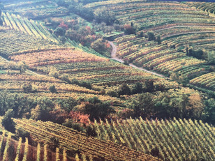 Get to know Slovenian wine - Primorska region, Goriška Brda district