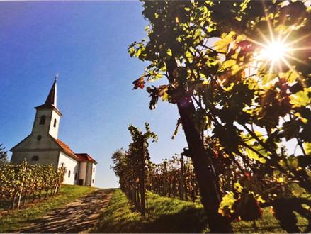 Get to know Slovenian wine - Posavje region, Bela Krajina wine district