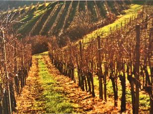 Get to know Slovenian wine - Posavje region, Bizeljsko-Sremič wine district
