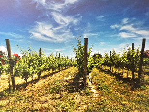 Get to know Slovenian wine - Primorska wine region, Slovenian Istria wine district
