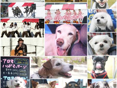 ☆浜松ふれあいフェスティバル Chain of smiles報告♬