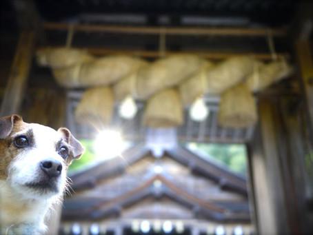 出雲大社〜美保神社まで聖なる旅☆