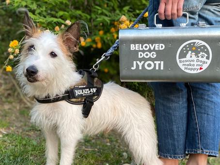 Beloved Dog, Jyoti ❤️