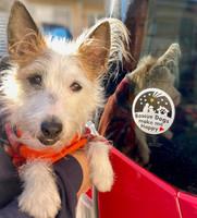 保護犬プロジェクト