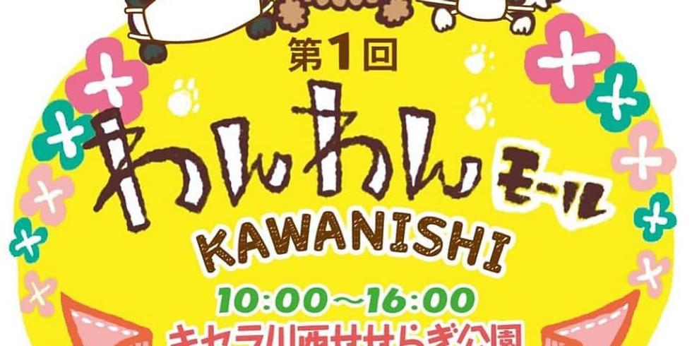 Felicite @第1回わんわんモール KAWANISHI