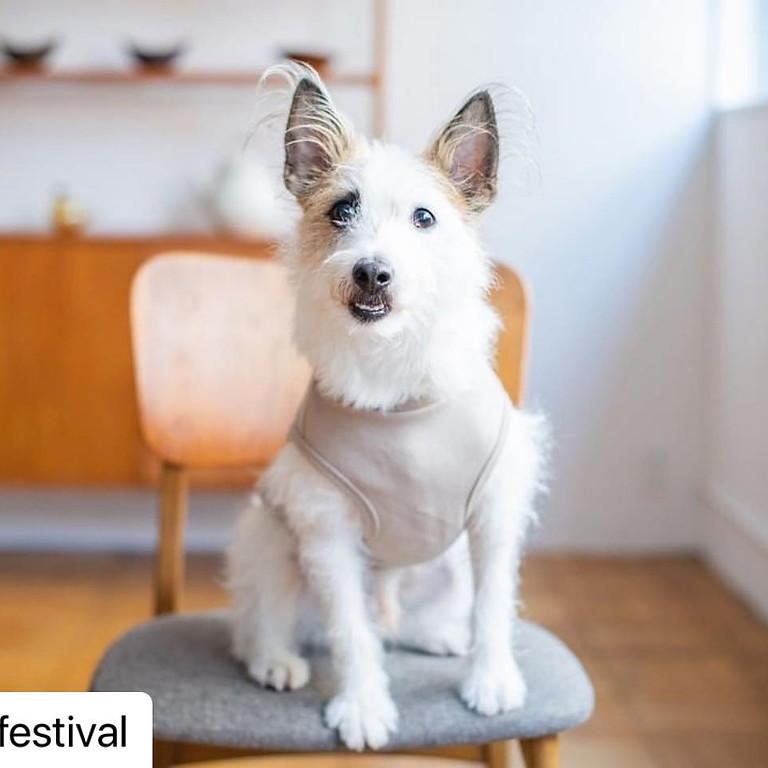 Felicite @Jack Russell Terrier Festival 2021