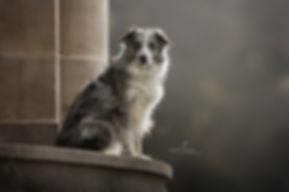 outdoor fotografie, hond, bordercollie, sighthound, Nuelle Flipse, Nuelle Flipse photography, fotografie, hondenfotografie