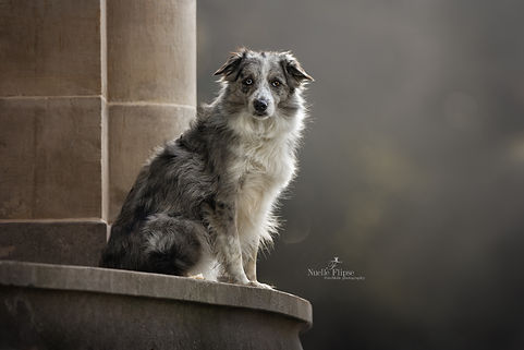 outdoor fotografie, hond, bordercollie, sighthound, Nuelle Flipse, Nuelle Flipse photography, fotografie, hondenfotografie