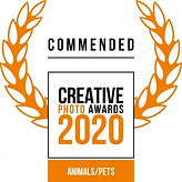 Siena awards commended 2020