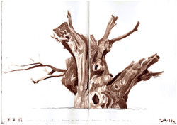 Study of a crazy trunk, 2018