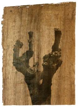 The elm (Adam), P/A