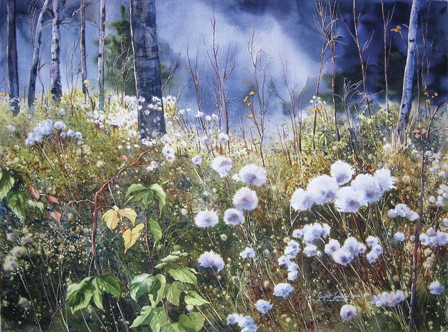 Image Judith Tremblay