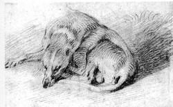 Fig 16 dog RosenbergPrat_R856.JPG