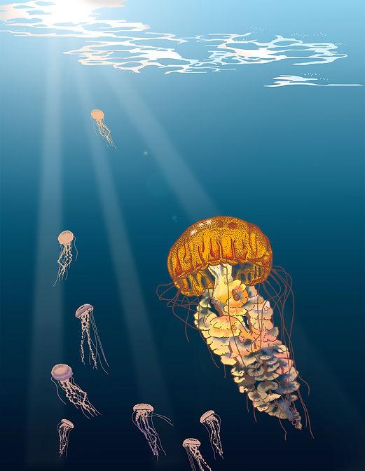 Michelle Hartmann Illustration Digital Painting Qualle