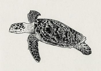 Schildkröte Ilustration Ink Michelle Hartmann