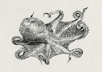 Tintenfisch Ink Illustration Michelle Hartmann