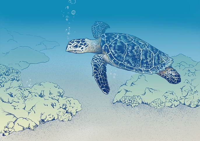 Michelle Hartmann Illustration Digital Painting Meeresschildkröte