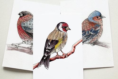 British Garden Birds set of cards, Finch bird pack of 3 greeting cards