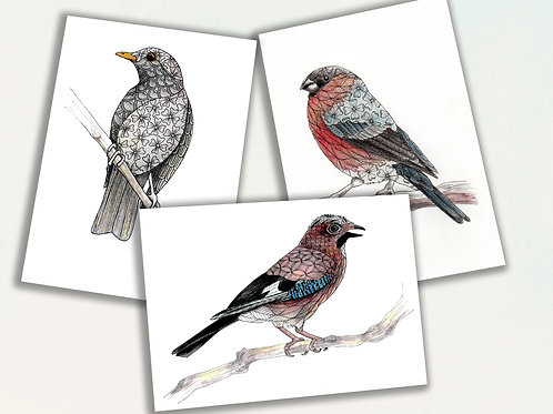 Pack of cards, British Garden Birds, Set of 3 nature inspired greeting cards