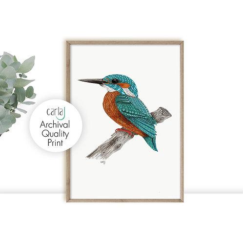 Kingfisher bird art print, Modern farmhouse prints, Teal wall art, Bird illustra