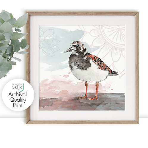 Coastal Bird Art Prints, Turnstone Bird Illustration, Bird Lover Nature Prints,