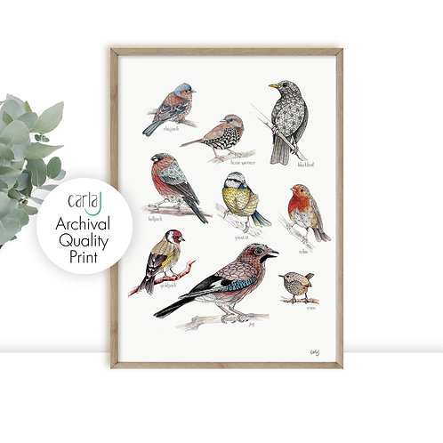 British garden birds print, Bird lover gift, Bird watcher, Nature wall art, Illu