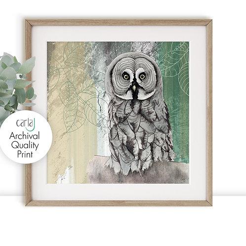 Grey Owl print, Bird of Prey print, Owl gifts, Wildlife Art for the Bird Watcher