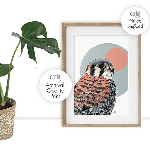 Scandi Decor, Bird of Prey Kestrel Print, Contemporary Wall Art, Wildlife Art fo