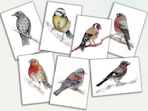 British Garden Birds, set of 7 greeting cards, Blackbird, Robin, Blue Tit, Chaff