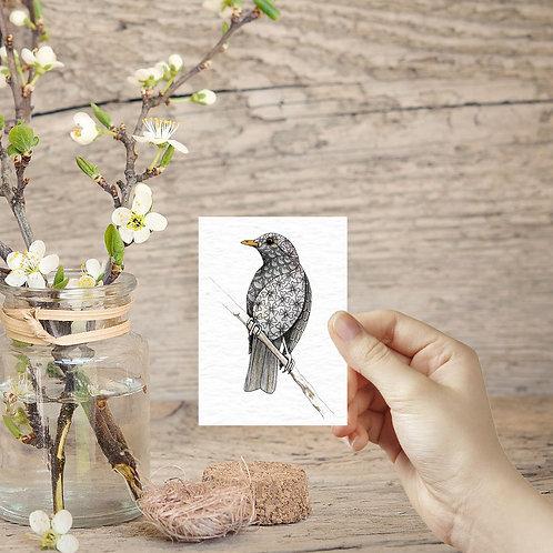 Blackbird print british garden birds ACEO print miniature prints tiny art print