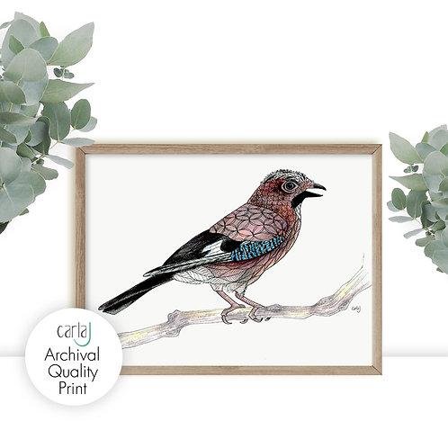 Jay Bird Illustration Print, Nature Wall Art, Bird on a Branch, British Birds