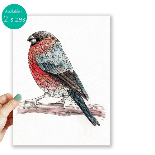 Bullfinch, british garden birds nature art illustration print, bird lover gift n